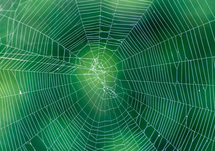 spider web on monotone